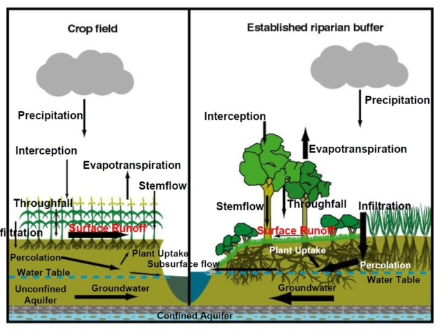 diagram of soil and water cycle as plants grow