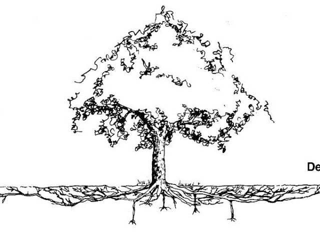 Diagram showing the depth of tree roots